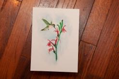 hummingbird at cardinal flower img_1018